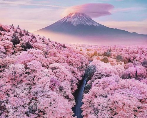 5-best-cherry-blossom-spots-feature-2